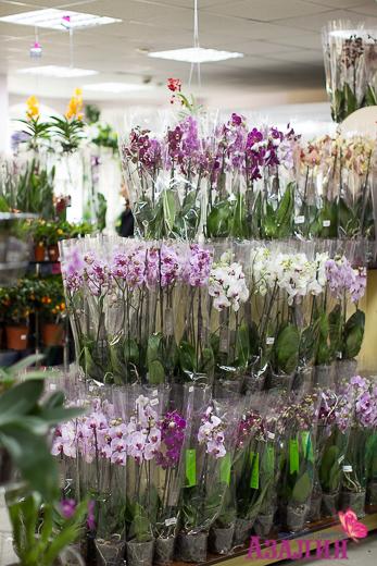 Магазины цветов в г. уфа, орхидеи